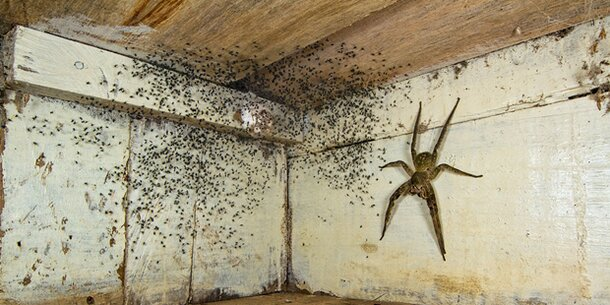 Monster spinne im zimmer schockt internet - Spinne im zimmer was tun ...