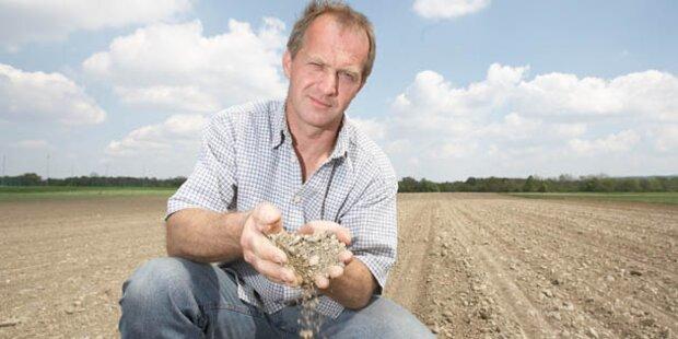 Dürre sorgt für Ernteausfälle