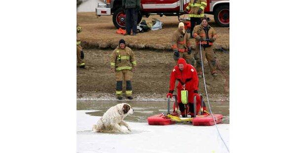 Hund mit Hintern am Eis festgefroren