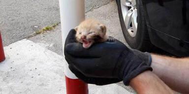 Wiener Pannenhelfer retteten Babykätzchen aus Motorraum