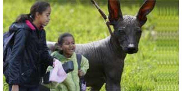 Obamas Töchter müssen weiter auf ihren Hund warten