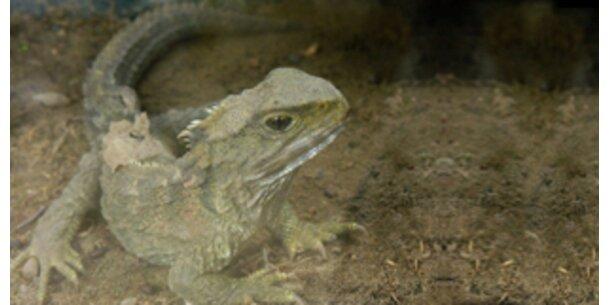 Dino-Echse zeigt größte evolutionäre Entwicklung