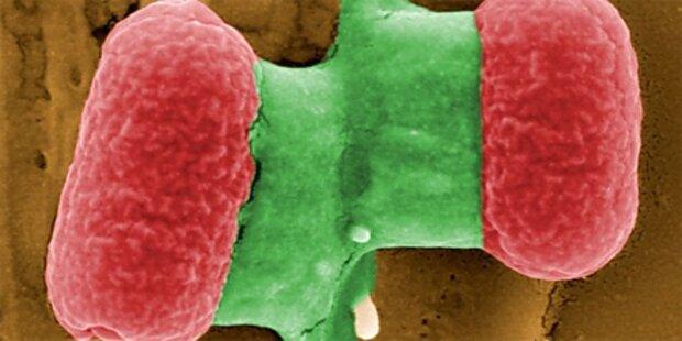 Spanische Gurken übertragen Killer-Keime