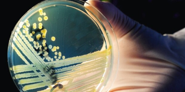 Forscher identifizieren Bakterium