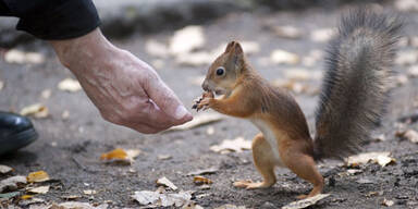 Mann fütterte Eichhörnchen mit Crystal Meth