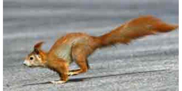 Eichhörnchen verursachte Auffahrunfall