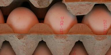 Eierverarbeitender Betrieb in NÖ im Visier