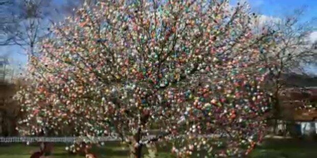 Osterbaum mit über 10.000 Eiern