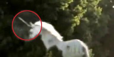 Video: Einhorn in Kanada gefilmt