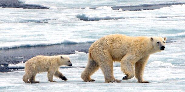 Grönland-Eis könnte komplett schmelzen