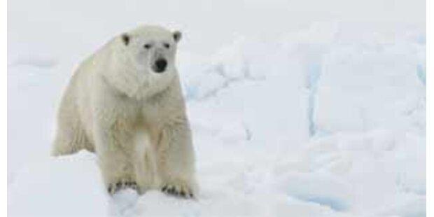 Eisbär griff Fotografen an- erschossen