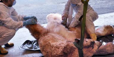 Norwegischer Killer-Eisbär war hungrig