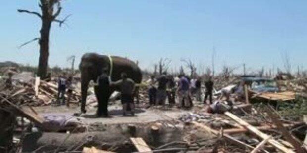 Elefant hilft bei Aufräumarbeiten nach Tornado