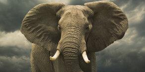 Elefanten-Mama hilft ihrem Kind