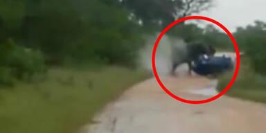 Schock: Elefant greift Auto von Touristen an