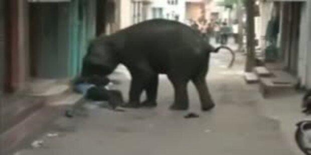 Wilde Elefanten laufen Amok in Stadt