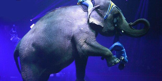 Deutscher von Zirkuselefant getötet