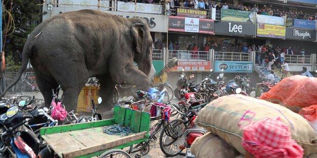 Wilder Elefant läuft Amok
