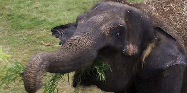 Elefant lief Amok: Vier Tote