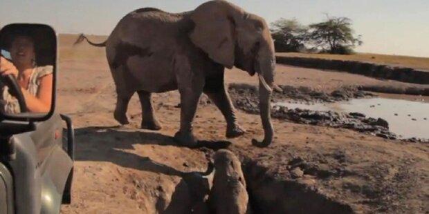 Irre Rettung eines süßen Elefanten-Babys
