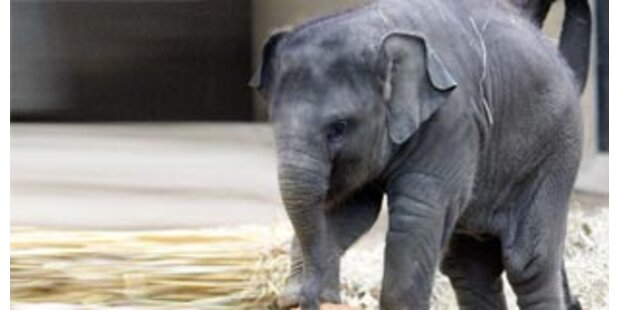 Elefanten sterben Elektroschock-Tod in Indien