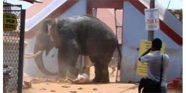 Elefant tötet bei Amoklauf drei Menschen