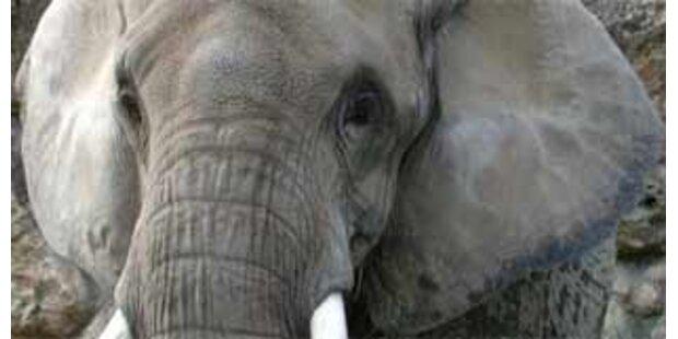 Wilder Elefant trampelt Burschen tot