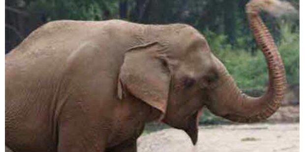 Polizei ermittelt gegen Zoo-Elefant