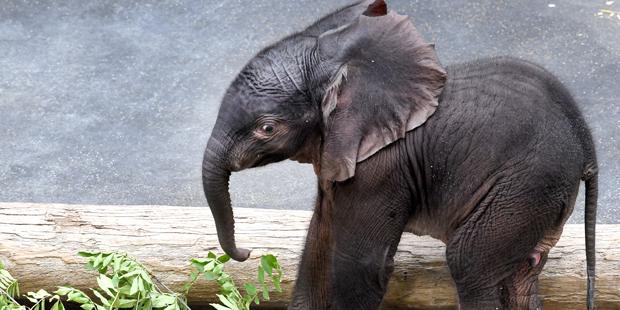elefantenbaby.jpg