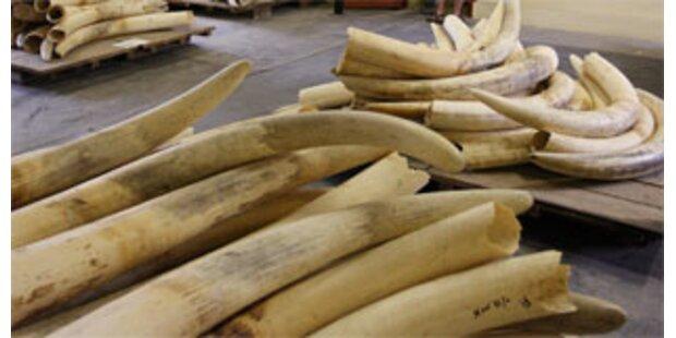 100 Tonnen Elfenbein versteigert