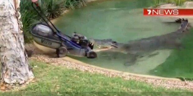 Kurios: Krokodil