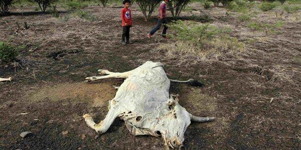 El Nino sorgt für Dürre und Hungersnot