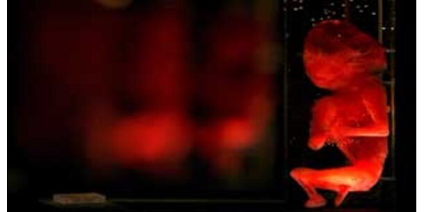 Forscher schufen Embryonen aus Mensch und Tier