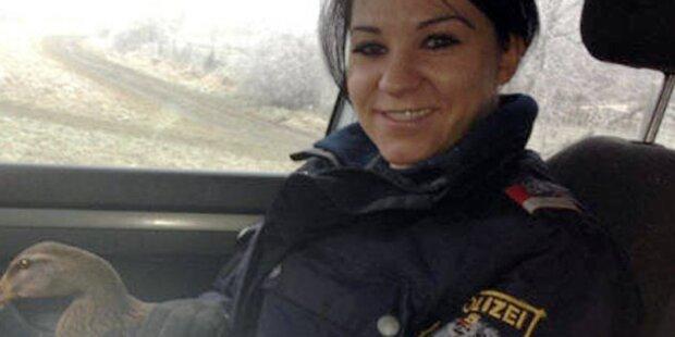 Polizisten retten Entendame aus Verkehr