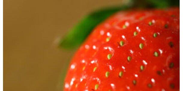Die Erdbeer-Saison ist eröffnet