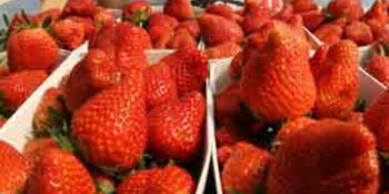 Pestizidreste in den meisten spanischen Erdbeeren