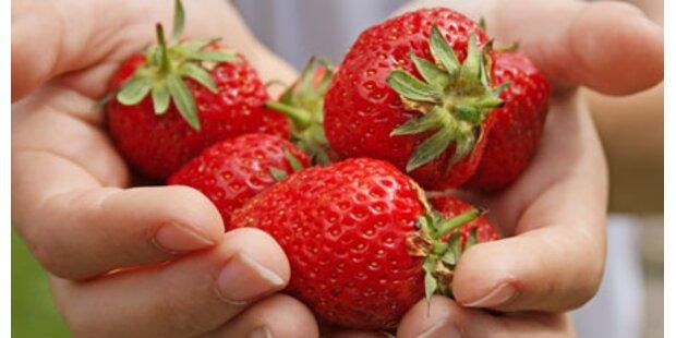 Jetzt sind unsere Erdbeeren reif!