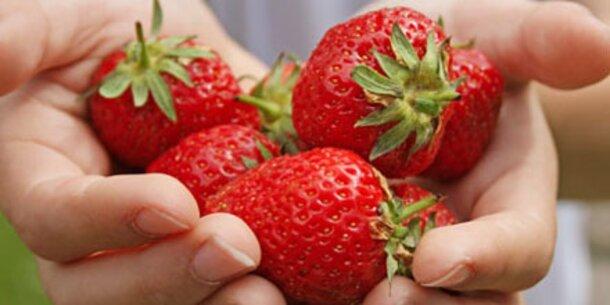 Unsere Erdbeeren sind jetzt da