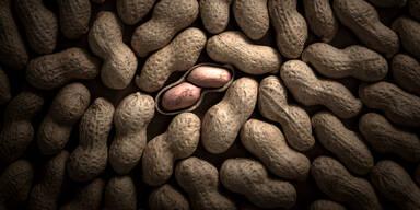 Dieses Pflaster soll die lebensgefährliche Erdnuss-Allergie heilen