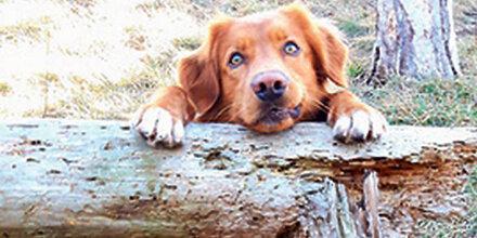 Die große Hunde-Wahl: 'Balou' als 2. Tages-Sieger