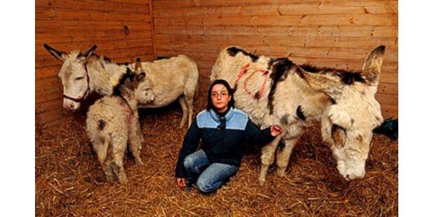 Über 30 tote Pferde und Esel inEngland gefunden