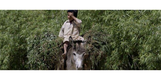 Ölpreis macht türkische Esel zu Goldeseln