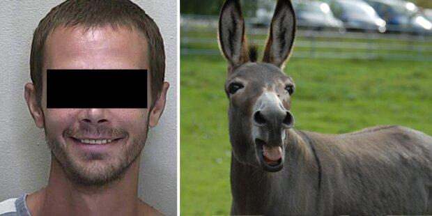 Bauer hatte Sex mit Mini-Esel