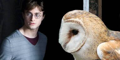 Potter-Fans verursachen Eulen-Sterben