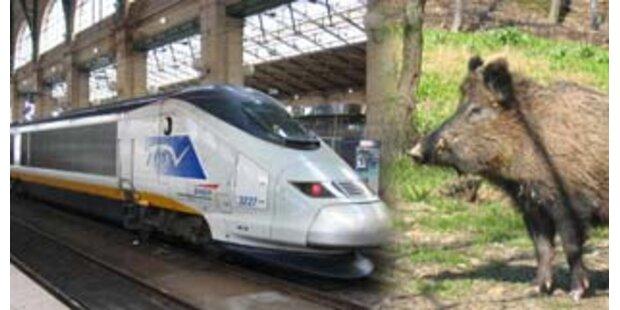 Eurostar-Zug kollidierte mit Wildschwein