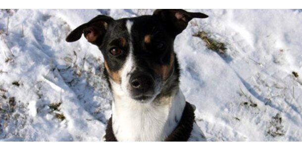 Das ist Österreichs liebster Hund 2008