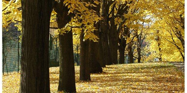 Wohin mit dem Herbstlaub