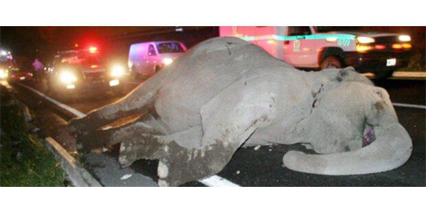 Ein Toter bei Bus-Crash mit Elefanten