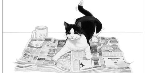 ÖSTERREICH sucht die frechste Katze