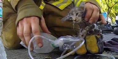 Feuerwehrmann rettet bewusstlose Katze